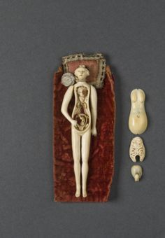 Female ivory anatomical figure, 17th-18th Century.  Hand crafted medical reference object used by doctors of the day.
