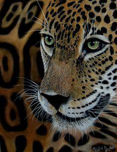 Sur la piste du Jaguar