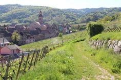 Alsace - Le sentier viticole des grands crus est un chemin balisé long de 17 km : il traverse les communes de Beblenheim, Bennwihr, Hunawihr, Mittelwihr, Riquewihr et Zellenberg.