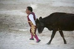 Dwarf bullfighter Osvaldo Hernandez from Los Enanitos Toreros (Dwarf Bullfighters) is tackled by a calf in Cancun May 29, 2011.