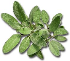 Benefits of Health Sage