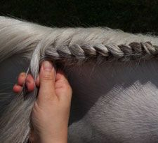 "How to make a French ""running"" braid on a horse."