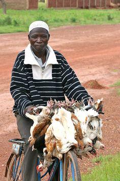 chicken run - Burkina Faso