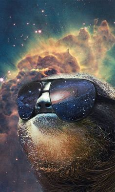 Sloth phone background.