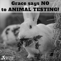 animal testing is cruel and unnecessary But his internship experience led him to realize just how cruel, and often  unnecessary, government-funded animal testing was—and how.
