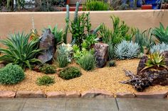 Here is a small collection of various cacti. There are so many different kinds of cacti, that you can build any combination of textures, shades of color, and shapes to make your garden look dynamic and interesting.