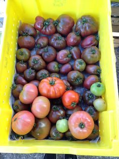 Delicious heirloom tomatoes from Black Rock Orchard - Waverly Farmers Market