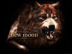 """Search Results for """"twilight wolf wallpaper"""" – Adorable Wallpapers Twilight Jacob, Twilight Saga New Moon, Twilight Wolf, Twilight Movie, Twilight Pictures, Vampires And Werewolves, Wolf Wallpaper, Book Tv, Jacob Black"""
