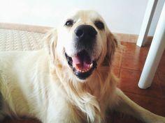 My Cool Dog   http://ift.tt/1TMrnu8 via /r/dogpictures http://ift.tt/1RvvVzd  IFTTT reddit