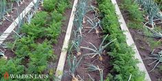 13+ DIY Projects For Self-Reliance From An Urban Homestead Tour In LA