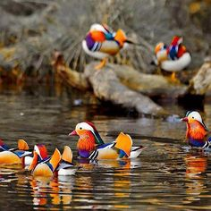 color by numbers ducks...