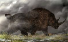 Prints are available on my website: I've been wanting to do a paleoart work featuring a woolly rhino for some time now. This one here is calling out across the plains for some of his friends and fa...