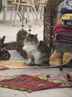 Arabian feel and a furry cat.. I love it :)
