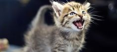 Need a dose of cute? This is definitely for you =) Feel free to share! #kittens #cats #pets #funny #cute #videos https://www.youtube.com/watch?v=4IP_E7efGWE