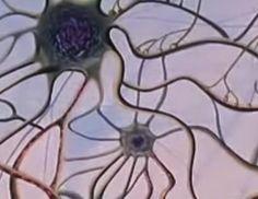 http://www.pinterest.com/mariluislgf/ciencias-de-la-naturaleza-ciencias-sociales/  Erase una vez la vida... El cerebro