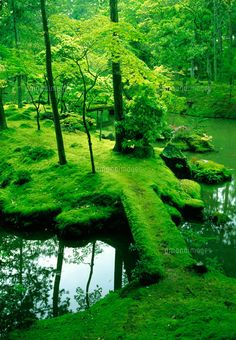 Moss Bridge - Saiho-ji Temple Kyoto, Japan Known as Kokedera, or the Moss Temple, Saiho-ji is home to one of Kyoto's most famous tourist attractions, the moss garden. Over 120 types of moss cover the garden grounds. Photo Japon, Japan Photo, Moss Temple, Moss For Sale, Beautiful World, Beautiful Places, Gorgeous Gorgeous, Beautiful Scenery, Japan Travel