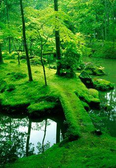 京都 西芳寺(苔寺)/Saiho-ji temple Kyoto, moss garden