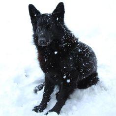 Winter come back!❄