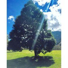 【syaolua】さんのInstagramをピンしています。 《要離開這美麗的仙境了😭💦 最後抱一抱滿滿芬多精的大樹🌳讓自己充滿正能量💪☺️對抗現實中的硬戰👊  #台灣#奧萬大#森林#大樹#美#旅遊#外拍#風景#大自然#賴小兔不負責任推薦 #taiwan#forest#tree#beautiful#good#travel#tour#tourism#instagood#love#like#l#me#hug#fun#sun#sunny#colorful#nature#綺麗》