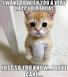 101 Funny Cat Birthday Memes - I want to wish you a very happy birthday.I love cake. If a feline lover in your life is expecting a birthday celebration, start it off right by sending them hilarious cat birthday memes! Cat Birthday Memes, Funny Happy Birthday Wishes, Happy Birthday Pictures, Funny Birthday Cards, Birthday Quotes, Birthday Humorous, Birthday Kitten, Happy Birthday Animals, Funny Wishes