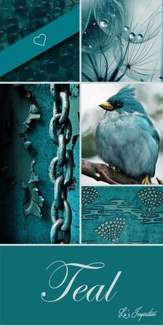 lu is not available to pin right now but she left this beautiful collage and example pins for us lets do aqua amp gold - PIPicStats Mood Colors, Teal Colors, Colours, Aqua, Teal Blue, Teal Art, Dark Teal, Blue Green, Shades Of Turquoise