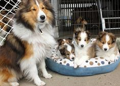 Mama and her offspring ~ VERY NICE FAMILY YOU HAVE THERE ~