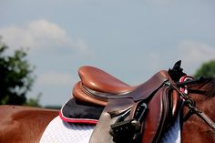 Saddle Photography