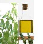 KREATIVNE IDEJE: Mediteranska biljka koja važi za jednu od najljeko...