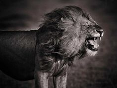 Photog captures the magnificent animals of the Kenyan wilderness