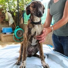 ACE Animal Care España - Kia