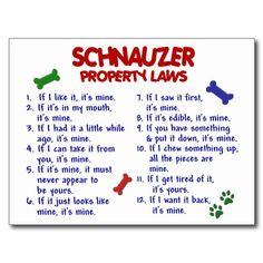 schnauzer rules - Google Search