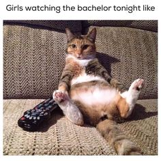 #bachelor  by jamesonanimalrescueranch