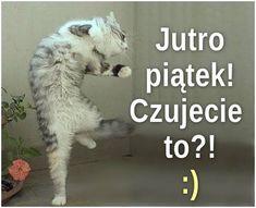 Jutro Piątek Humor, Coaching, Animals, Amigurumi, Cats, Crafting, Training, Animales, Animaux