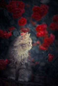 *** by Yuriy Korotun on 500px