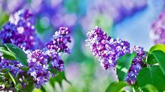 """Peaceful Music, Relaxing Music, Instrumental Music, """"In the Eve of Sprin..."""