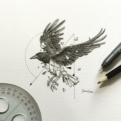 cuervo negro de Kerby Rosanes
