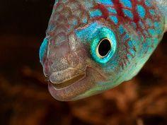 Nothobranchius eggersi (4) | Flickr - Photo Sharing!