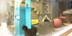 6 of the World's Most Luxurious Hotels for Cats