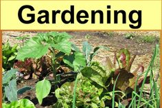 All thing gardening - growing tutorials, bees and native pollinators, avoiding toxins and GMOs in the garden, building healthy soil and more.
