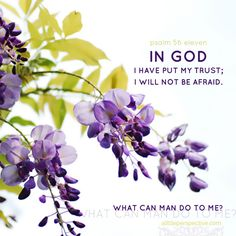 In God I have put my trust; I will not be afraid. What can man do to me? Psa 56:11 | scripture pictures at alittleperspective.com