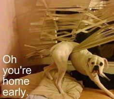 I'm pretty sure my dogs would do this if they weren't kenneled!
