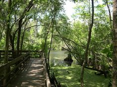 Beautiful Lettuce Lake #Park #Florida #Woods! Perfect #Wedding Spot!