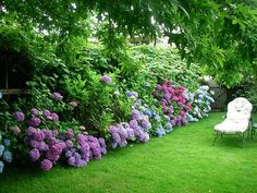 hydrangea border...although this type of hydrangea doesn't grow in my zone, I could use annabelle or limelight...