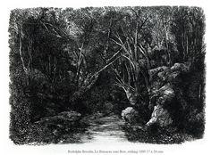 ruisseau sous bois