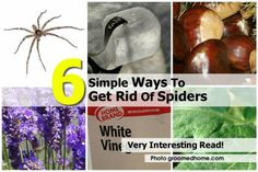 6 Simple Ways To Get Rid Of Spiders
