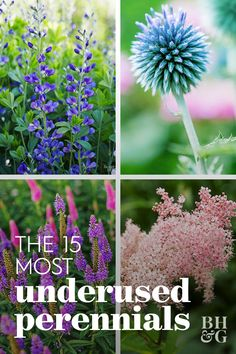 15 of the Most Underused Perennials for Your Garden You may have to search for them at your garden center or an online source, but they're all worth the effort. Here are 15 of our favorite underused perennials. Growing Flowers, Planting Flowers, Container Gardening, Gardening Tips, Vegetable Gardening, Organic Gardening, Cut Flower Garden, Cut Garden, Black Garden