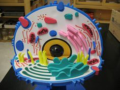 ANIMAL CELL MODEL IDEAS –Science class is always lots of fun! Learning science can be done in fun ways, especially when you learn the animal cell anatomy. One fun way to learn it is by knowing animal cell model ideas. 3d Animal Cell Project, Plant Cell Project, Cell Model Project, 3d Cell Model, 3d Animal Cell Model, Dna Model, Biology Projects, Science Projects, School Projects