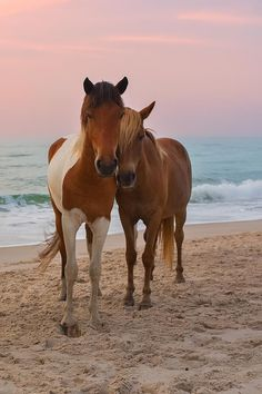 Horse friends hanging out at the beach.