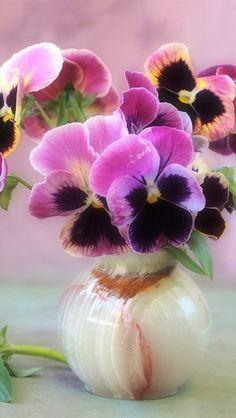 Pansies in a vase Beautiful Flowers Garden, Amazing Flowers, Pretty Flowers, Nature Iphone Wallpaper, Flower Wallpaper, Wallpaper Ideas, Flower Images, Flower Art, Fleur Pansy