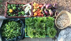Centre Hospitalier, Grace, Tour, Sprouts, Vegetables, Backyard Farming, Princess, Vegetable Recipes, Veggies